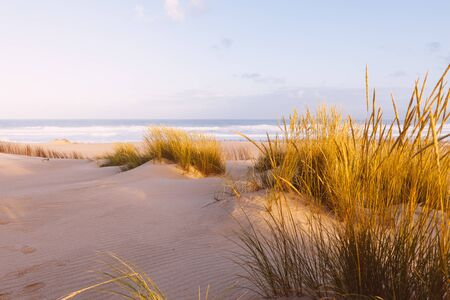 Sand dunes and ocean at sunny morning. Beautiful summer landscape with ocean view