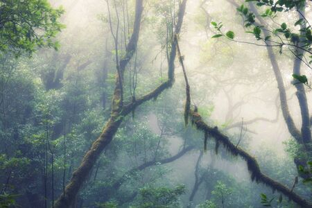 Deep tropical jungles of Southeast Asia in spring