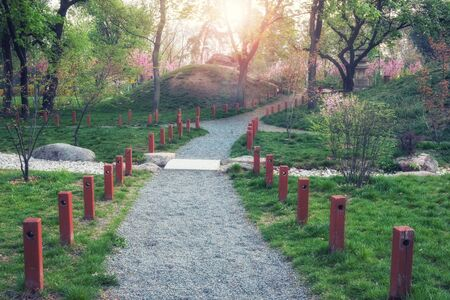 Green city park. Spring morning at park