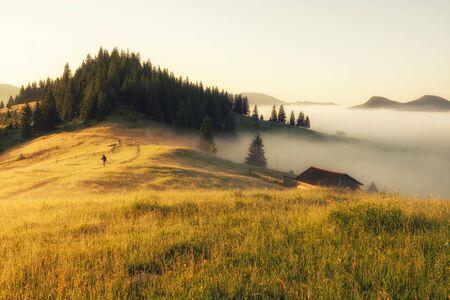 Summer sunny morning landscape in the mountains. Sunrise nature beauty world 版權商用圖片