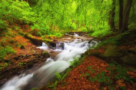 River in the forest. Green summer woodland and creek 版權商用圖片