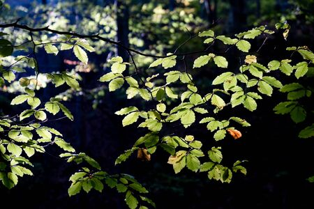 green leaves with sun. Green summer forest nature