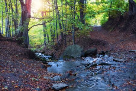 Beautiful forest with creek in a golden autumn nature. Beauty world of fall colors landscape