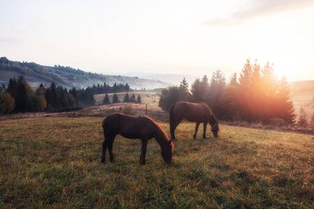 Horses in the morning mist on the pasture over autumn rural landscape