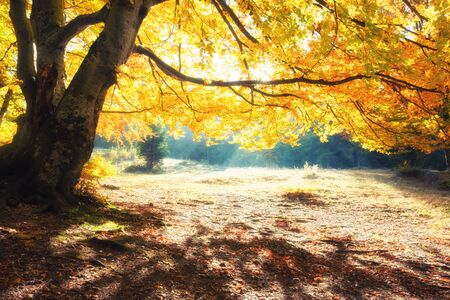 Sunrise in autumn forest. Bright golden fall nature landscape