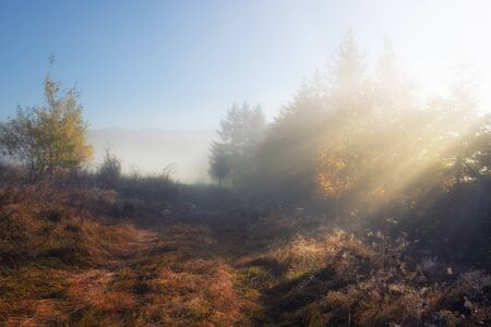 Sunrays through the autumn foggy woods. Beautiful autumn day at rural nature 스톡 콘텐츠