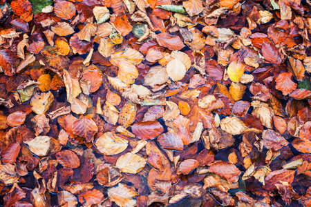autumn leaves nature absctract background 스톡 콘텐츠