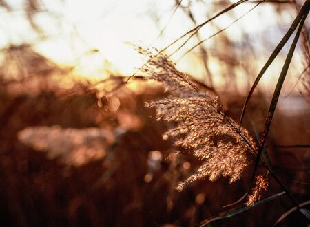 Grasses at sunset in Prime Hood Wildlife Refuge