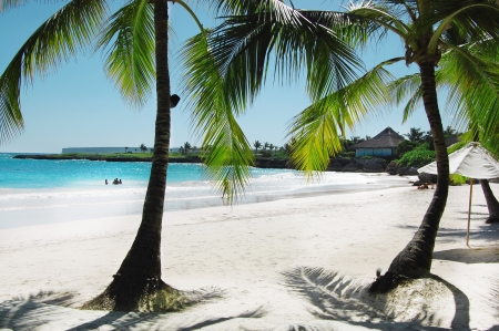 A beautiful tropical beach with palm trees photo