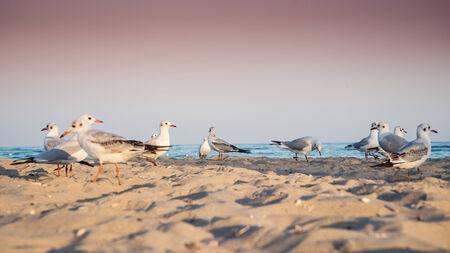 seagulls: Seagulls at the beach