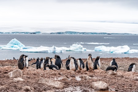 Penguins in Antarctica. Port Lockroy. Expedition