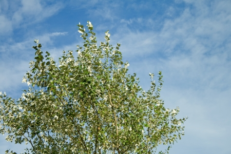 green tree on a background of blue sky
