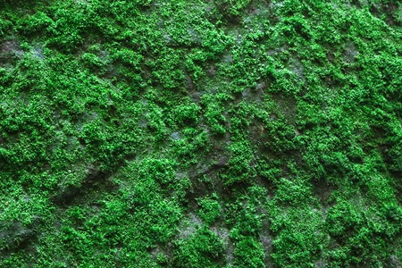 green moss  as a background - pattern- texture Stock Photo