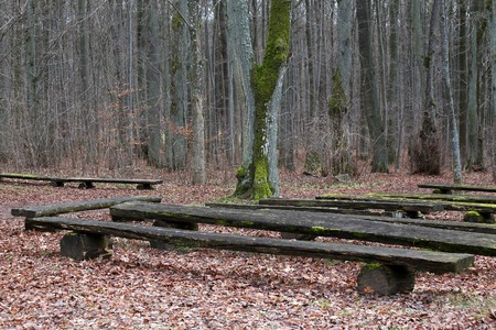 several wood Benches in the autumn forest Stock Photo