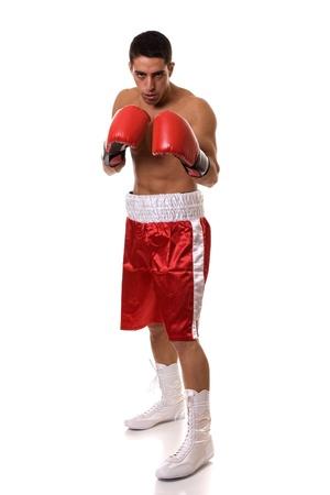Boxer 免版税图像