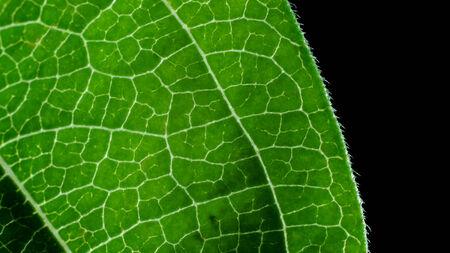 deatil: Close up deatil of a zinnia flower leaf.