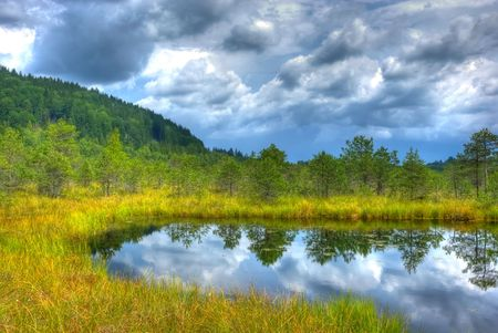 HDR image from Tinovul Mohos - a floristic reservation with various rare plants next to Sf. Ana Lake, Romania  photo