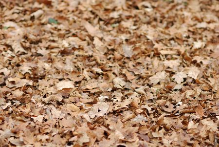 fallen foliage with beautiful brown autumn colors photo