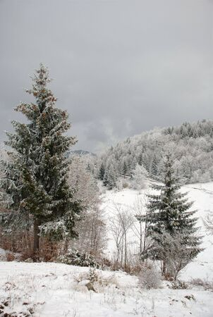 beautiful forest and hill coverd with first snow in winter