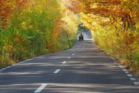 scenic view of a road and forest in autumn in a sunny day photo