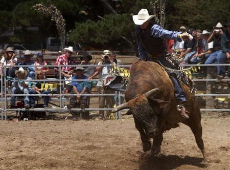Rodeo rider on a bull Stock Photo