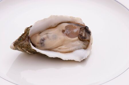 Single Oyster in the shell on a plate
