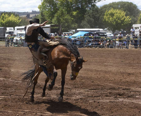 arena rodeo: A rodeo riider riding a bucking horse