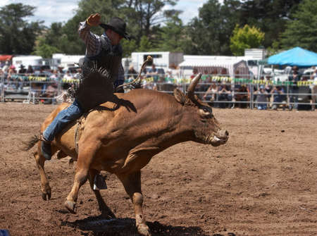 arena rodeo: Rodeo Rider on a Bull Stock Photo