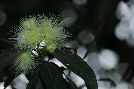 close up: Close up to a plant