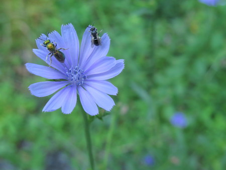 Beautiful violet flower with feeding insects Reklamní fotografie - 100331496