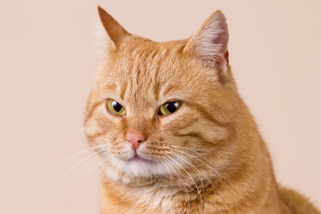 smiling cat: Smiling Cat with evil look,expecting for something  isolated on white background Stock Photo