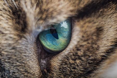 cat eye: Cat eye.Macro shoot of cat eye