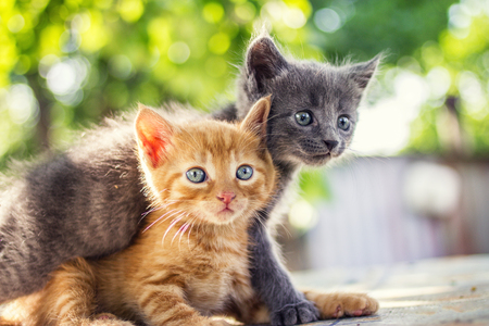 Two adorable kittens playing together.Kittens outdoor. Stock Photo