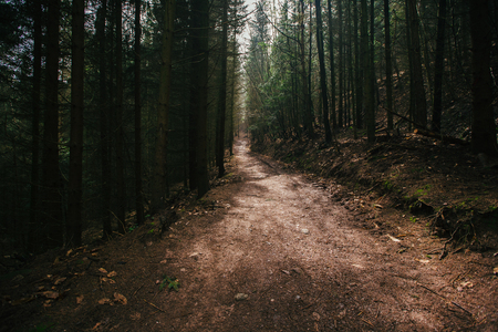Hiking Trail in the forest.A  path in a densely wooded area in Mont-Sainte-Odile,Strasbourg,France.