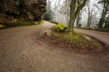 HikingRoad in the forest.A road in a densely wooded area in Mont-Sainte-Odile,Strasbourg,France.