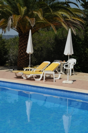 sunbeds: Sunbeds beside a swimming pool with date palm
