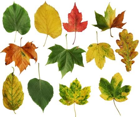 diferentes tipos de hojas de otoño aislados en blanco Foto de archivo