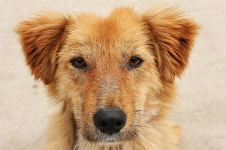 stray dog: Abused stray dog Stock Photo