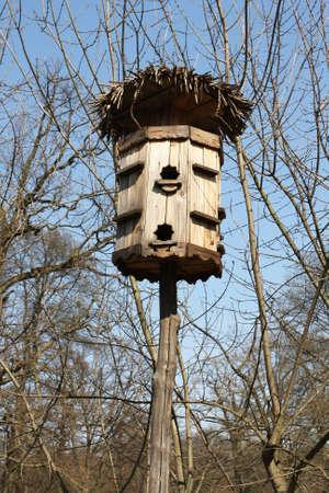 maison oiseau: Maison de l'Oiseau dans les for�ts