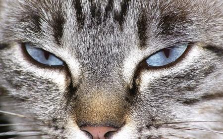 Cat eyes        Stock Photo