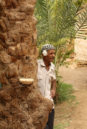 Old man resting near a palm tree in a desert oasis. Location: near Duz city at the edge of Sahara desert, Tunisia autumn 2008