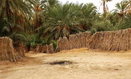 Palm trees desert Jungle Stock Photo - 11710158
