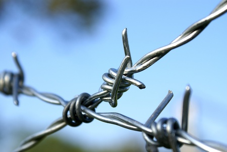 barbed wire fence: Barbed wire detail