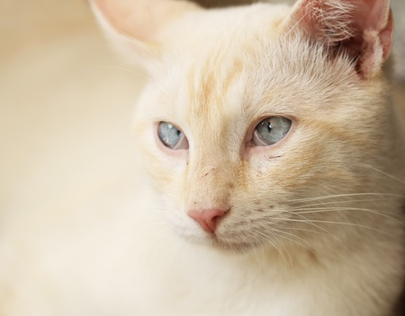 animal body part: Yellow cat portrait Stock Photo