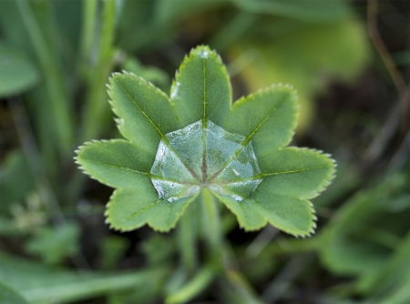 blurr: Water drops on a small green plant