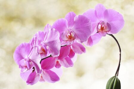 Beautiful orchid flowers photo