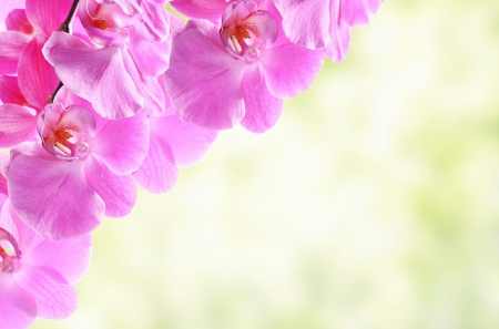 Abstract orchid flowers photo