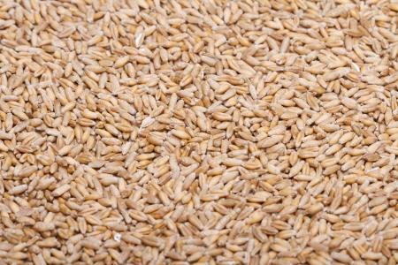 Raw wheat grains Stock Photo - 18207375