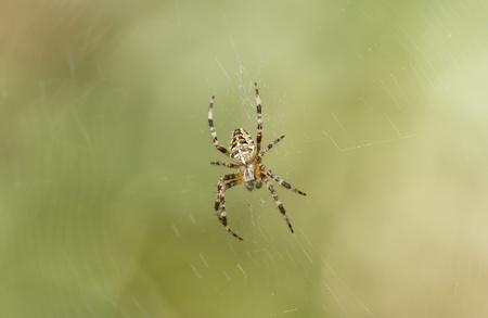 arachnophobia: Spider on a web