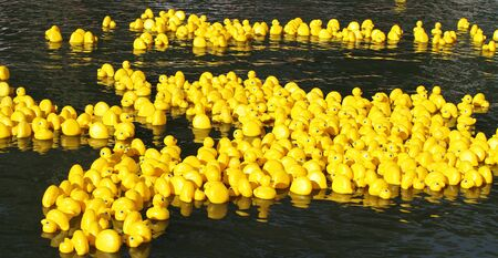 examples: Floating yellow little ducks